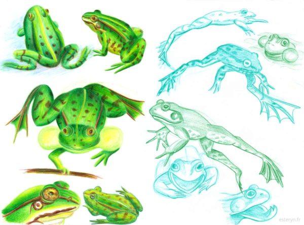 Recherches pour La Grenouille et la tortue