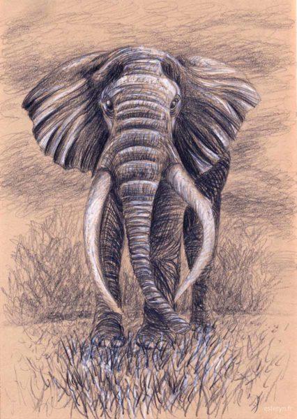 portrait éléphant